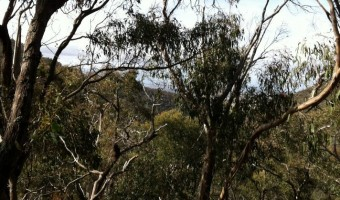 Brisbane Ranges National Park - Great hiking west of Melbourne