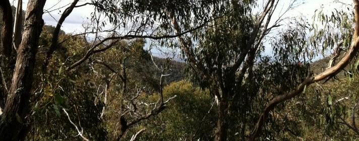 Brisbane Ranges National Park - Great hiking west of Melbourne