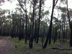 Ghosts of bushfires past