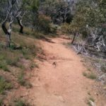 The changing surface of the Werribee Gorge circuit - orange dirt track