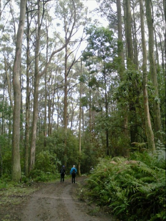 Mount Macedon Walks