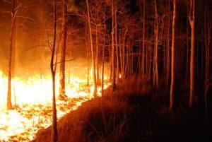 Bushfire burning through trees at night