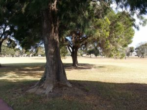Trees at Cherry Lake Altona
