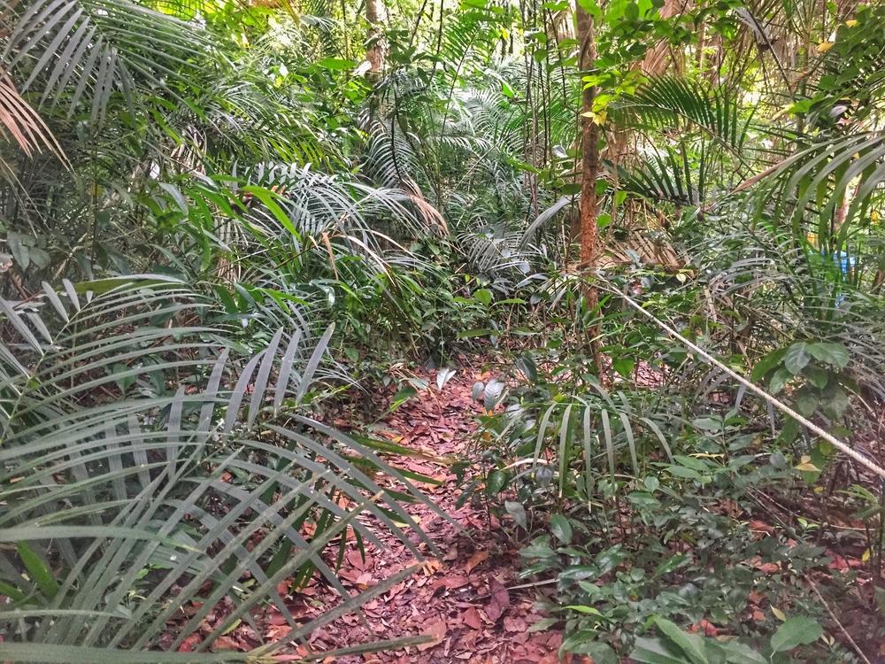 Kapas Island jungle trail