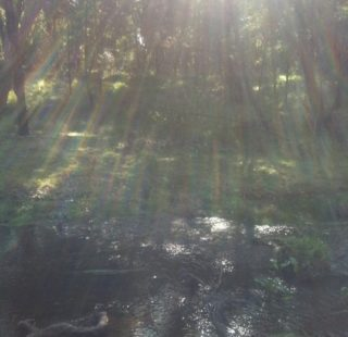 Winter's sun streaming through the trees at Long Forest
