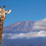 Training to hike Mount Kilimanjaro
