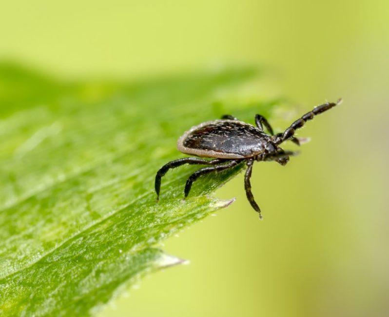 Best Tick Repellent For Humans 2020.How To Avoid Ticks When Hiking Heading For The Hills